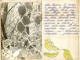 kut-06-1980-07-27